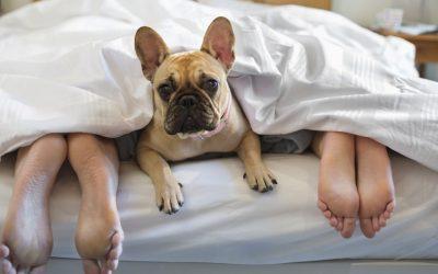6 passos para se tornar um hotel pet friendly